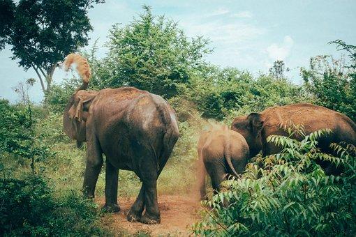 Sri Lanka, Tangalle, Asia, South Asia, Udawalawe