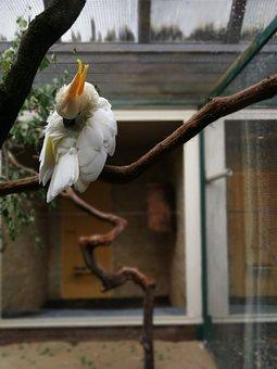 Cockatoo, Bird, Branch, Animal, Bill, Feather, White