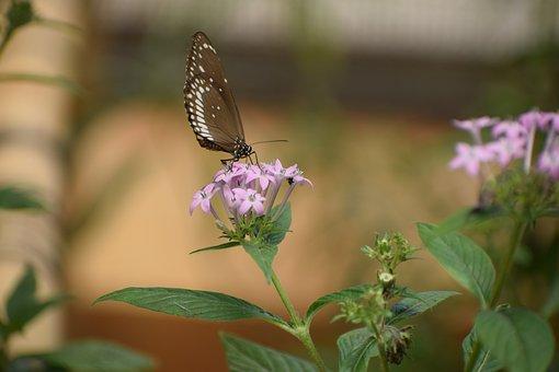 Bannerghatta Biological Park, Butterfly, Nocturnal