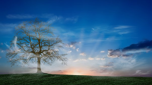 Tree, Sky, Mist, Landscape, Nature, Sunset, Clouds