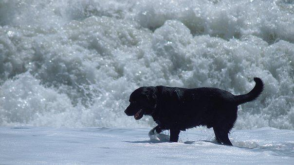 Dog, Sea, Wave, Water, Beach, Sand, Ocean, Run, Coast