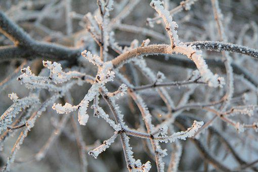 Winter, Frost, Cold, Ice, Nature, Landscape