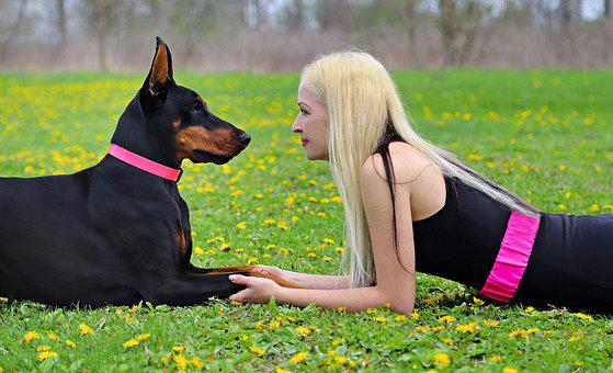 Dog, Doberman, Friendship, Love, Emotion, Loyalty