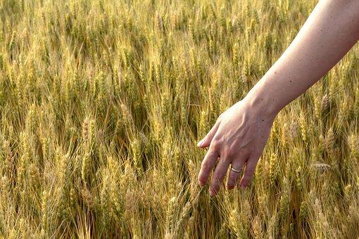 Summer, Spring, Field, Hand, Emotion, Feeling, Joy