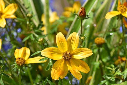 Flower, Flower Color Yellow Orange, Stamens, Flora