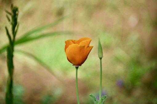 Flower, Flower Color Yellow Orange, Flora, Fulfillment