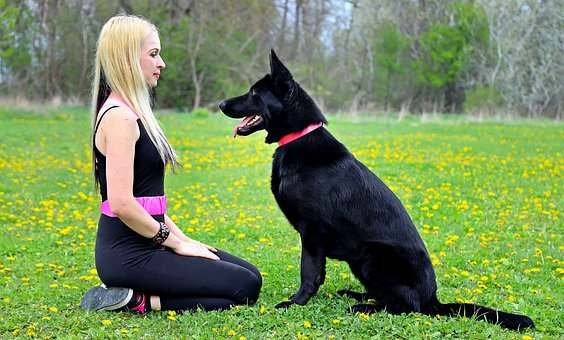 Black Dog, German Shepherd, Friendship, Love