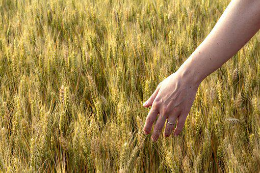 Summer, Spring, Field, Hand, Emotion, Feeling, Joy