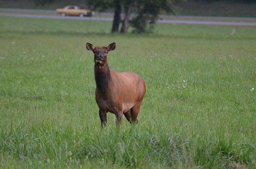 Momentum Bull, Momentum, Mammal, National Park