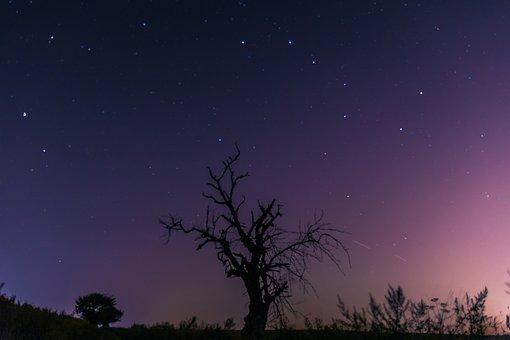 Night, Sky, Celebrities, Lone Tree, Milky Way, Field