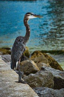 Bird, Johns Pass, Water, Gulf, Florida, Outdoors, Ocean