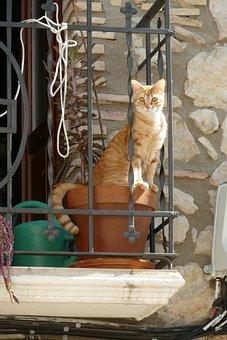 Cat, Cats, Pet, Fauna, Mammal, Red, White, Pot