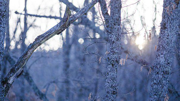 Trees, Snow, Winter, Forest, Frozen, Cold, Rural