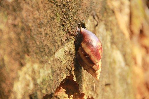 African Snail, Animal, Islets, Bahia, Brazil