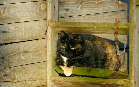 Cat, Pet, Domestic Cat, Animal World, Animal, Animals