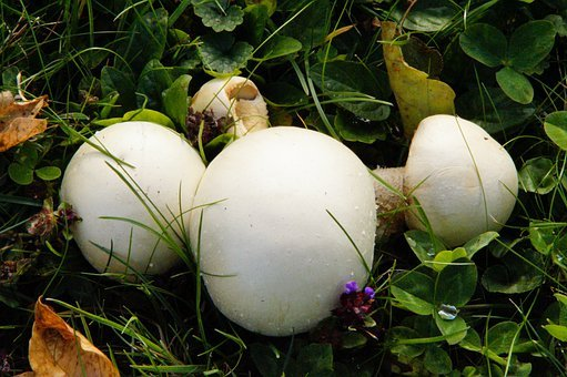Mushrooms, Meadow, Autumn, Mushroom Time, October