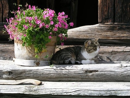 Flowers, Summer, In The Shadow, Cat, Concerns, Pet