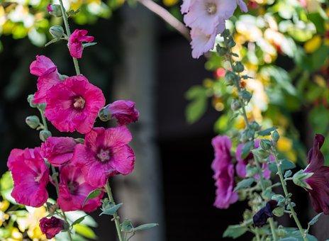 Flowers, Garden, Nature, Green, Colorful, Gardening