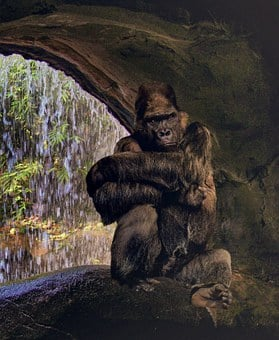 Gorilla, Ape, Grim, Silverback, Watch, Thinking, Jungle