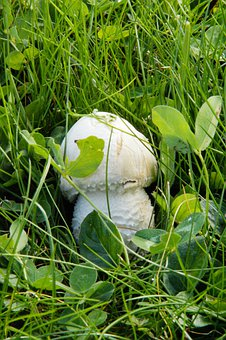 Mushroom, Hidden, In The Grass, Grass, Meadow