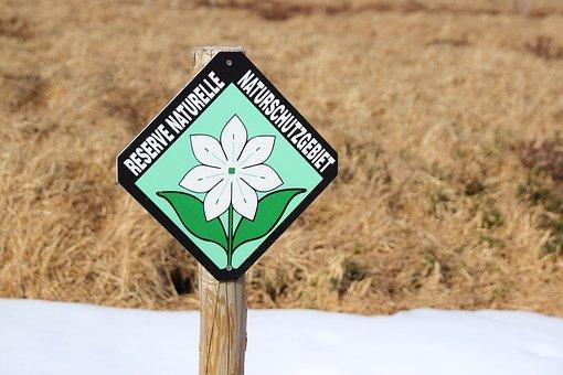 Shield, Nature Reserve, Nature, Reed, Belgium, Ban