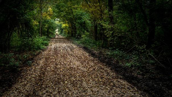Atmosphere, Light, Nature, Forest, Tree, Path