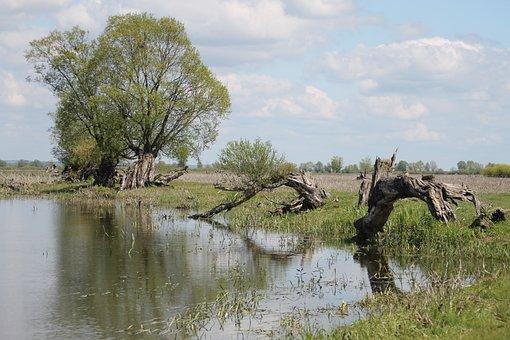 River, Warta, Countryside, Poland, Willow