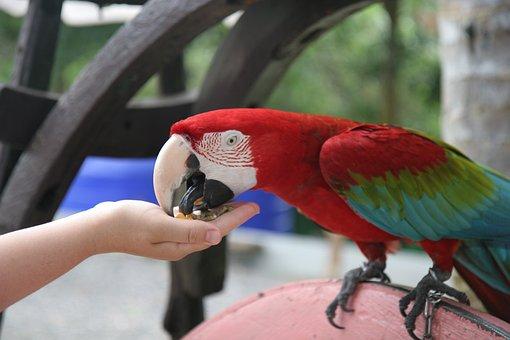 Samui, Ban Thai, Parrot, Park