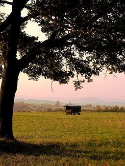 Tree, Schäfer Wagon, Evening Light, Autumn, Meadow