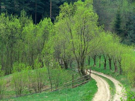 Willow, Way, Country Road, Spring, Green, Tree