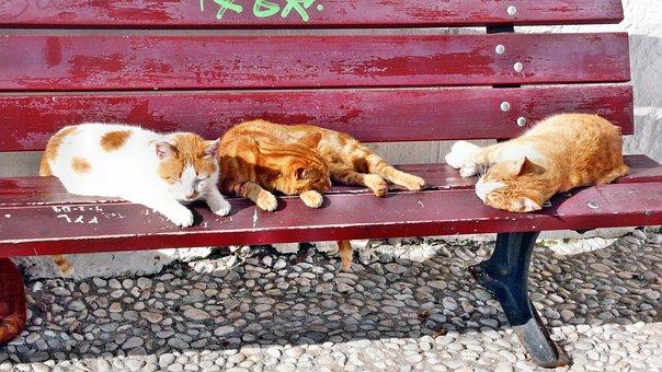 Cat, Rest, Summer, Ginger, Fur, Dormant, Bank, Warm