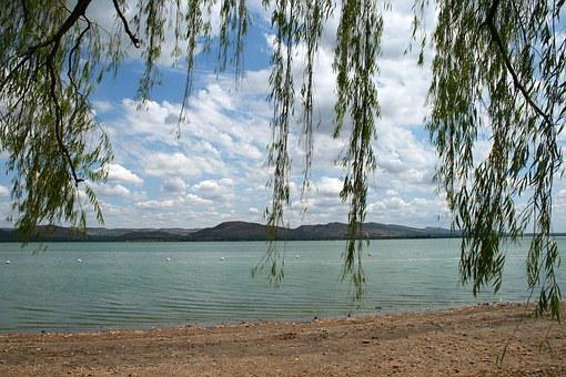 Dam, Water, Lake, Tree, Willow, Boughs, Shore, Nature
