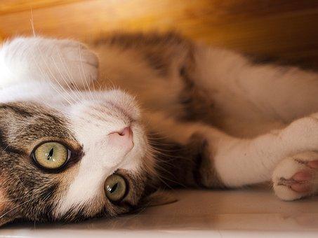 Cat, Pet, Mieze, Cat Face, Head, Young Cat