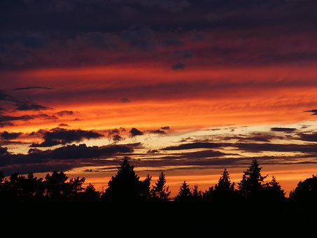 Sunset, Firs, Conifers, Afterglow, Sky, Silhouette