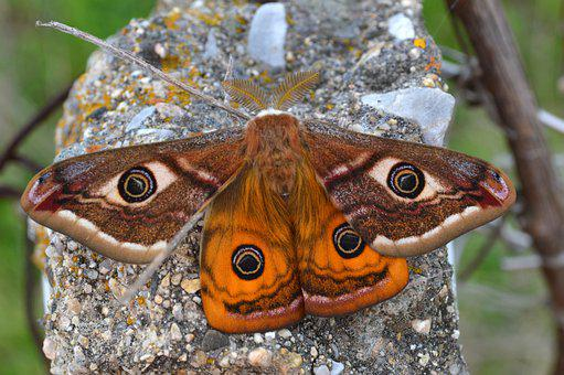 Animal, Beauty, Butterfly, Close, Colorful, Cute