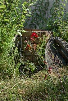 Fountain, Rose, Flower, Garden, Plant, Stone, Open