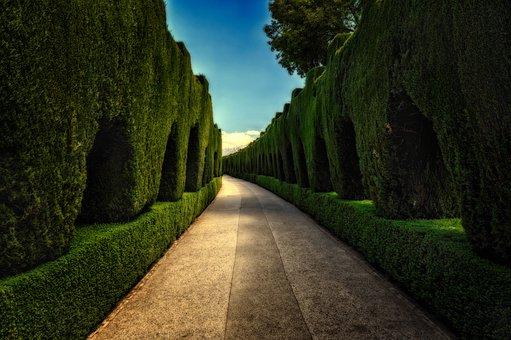 Park, Mystical, Hedge, Away, Gang, Mysterious, Mood
