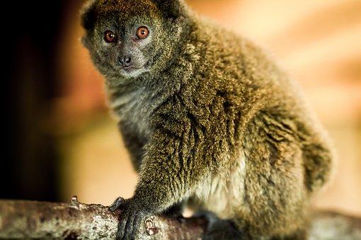 Monkey, Zoo, Animal, Nature, Portrait, Dangerous