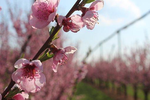 Blossom, Bloom, Sky, Rheinland, Summer, Nature, Flower