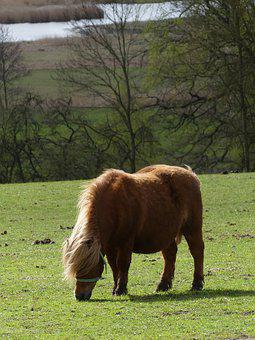 Pony, Horse, Meadow, Graze, Mane, Animal, Nature