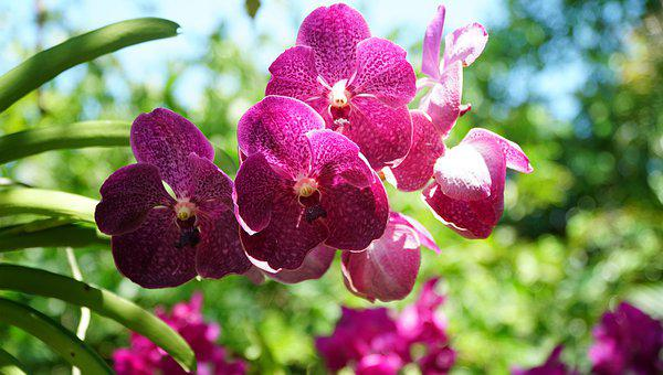 Flower, Flora, Nature, Summer, Garden, Orchid, Purple