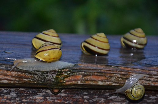 Snail, Tape Worm, Mollusk, Reptile, Slowly, Raised Bed
