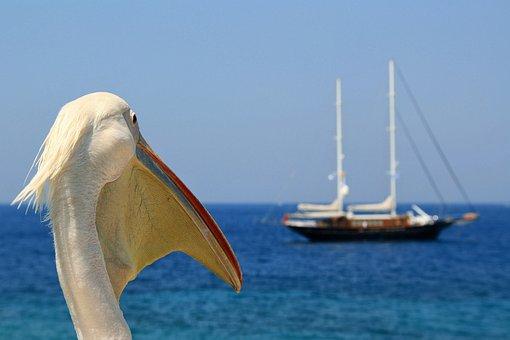 Pelican, Envy, Sea, Sailboat, Mykonos, Greece, I Long