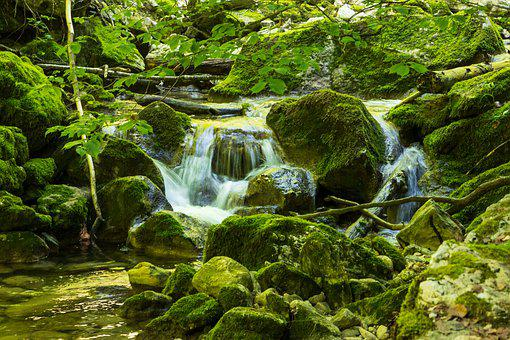 Torrent, Bach, Green, Water, Nature, Waterfall