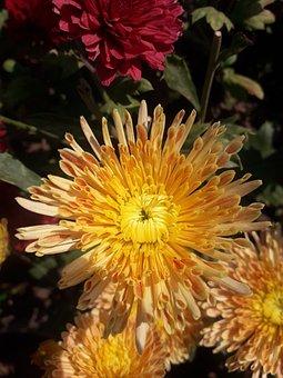 Flower, Bloosm, Yello, Colorful, Photographer, Yellow