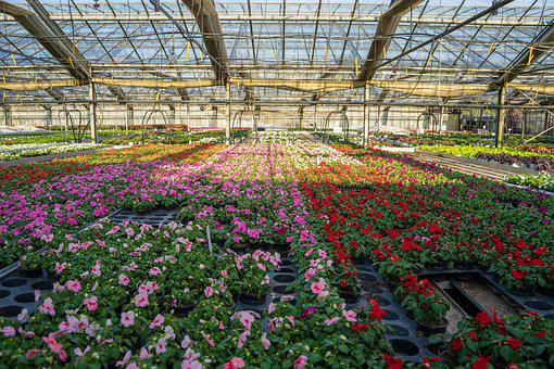 Greenhouse, Agricultural, Grow, Plant, Summer, Harvest