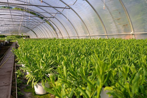 Nursery, Greenhouse, Plant, Nature, Agriculture, Garden