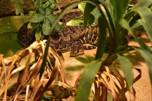 Snake, Reptile, Animal, Close-up, Nature, Terrarium