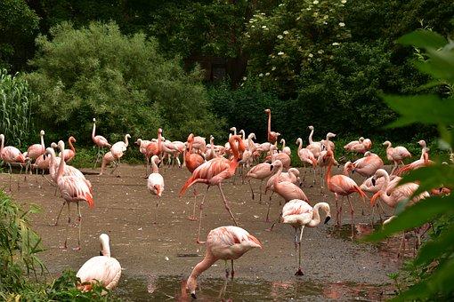 The Zoo, Animal, Bird, Feathers, Beak, Pink, Nature