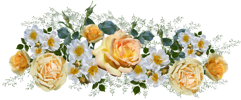 Flowers, Roses, White, Yellow, Arrangement, Perfume